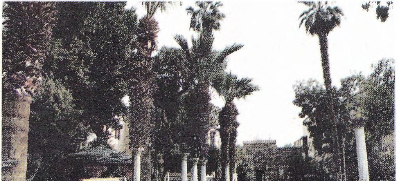Palm trees outside the Coptic Museum.